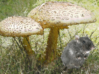 Mouse Under Toadstool