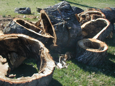Trees fall if they lack core values.