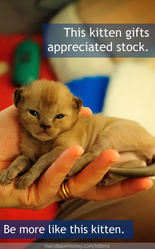 This kitten gifts appreciated stock.