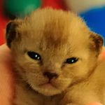 Financially Savvy Kittens on Gifts to Charity