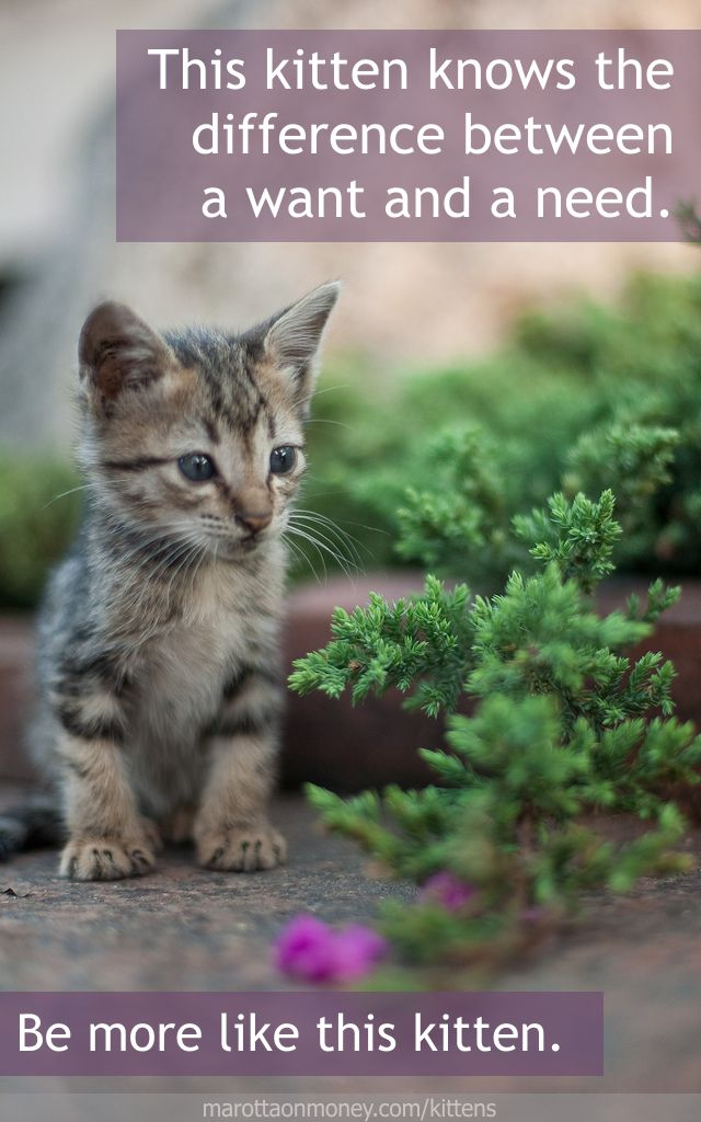 This kitten knows the difference between a want and a need.