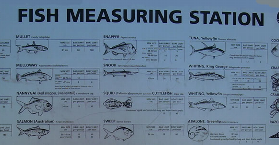 Fish Measuring Station