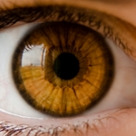 Contact Lens Regulations Cost Consumers Billions