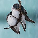 birds in snowstorm