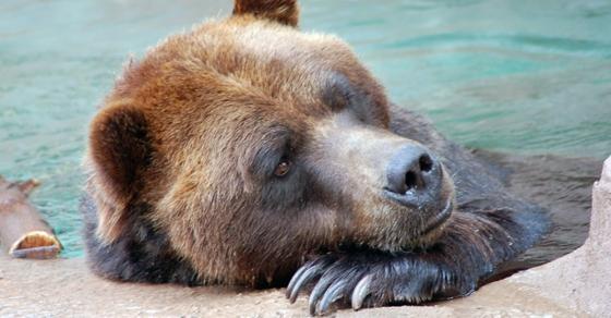 Double Bottom Bear: The Bear Market of 1970