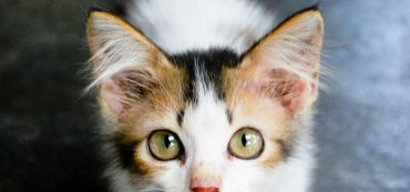 Financially Savvy Kittens on Value Wealth Management
