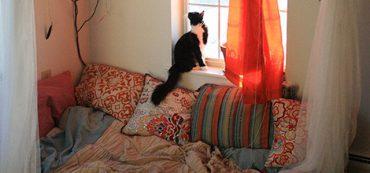 Financially Savvy Kittens on Net Worth
