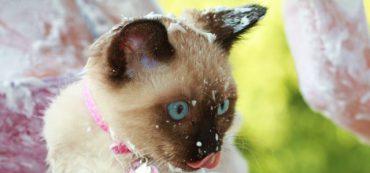 Financially Savvy Kittens on Free Fun Games