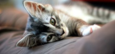 Financially Savvy Kittens on Market Timing