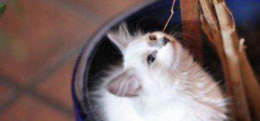 Financially Savvy Kittens on Earning Money