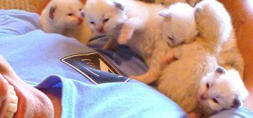 Financially Savvy Kittens on Retirement Plans