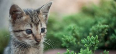 Financially Savvy Kittens on Honoring the Budget