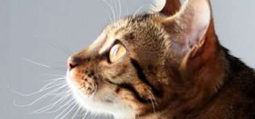Financially Savvy Kittens on Retirement in Retirement Planning
