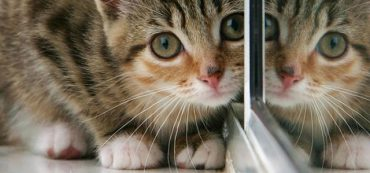Financially Savvy Kittens on Freedom Investing 2013
