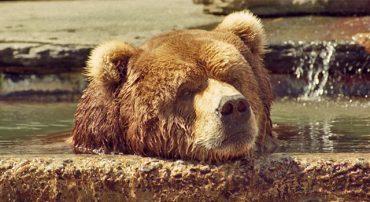 The Golden Bear: The Bear Market of 1973