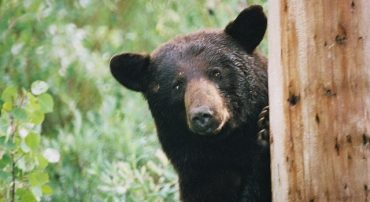 Black Monday Bear: The Bear Market of 1987