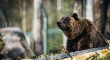 Surviving A Bear Attack in the Markets